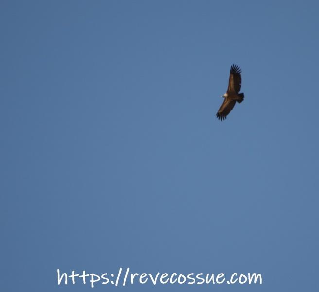Sobrevolando Sevilla